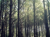 maderas Fotografía de archivo