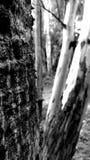 maderas fotos de archivo libres de regalías