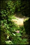 Maderas de hadas de la selva tropical de la fantasía Foto de archivo libre de regalías