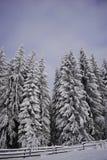 Maderas de pino Nevado Foto de archivo libre de regalías