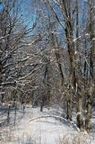 Maderas del invierno Imagenes de archivo