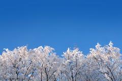 Maderas del invierno del hielo bajo el cielo Foto de archivo