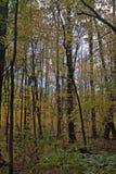 Maderas del otoño Imagen de archivo libre de regalías