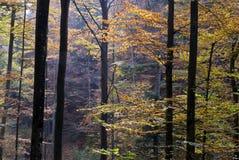 Maderas del otoño Foto de archivo libre de regalías