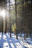 Maderas en el invierno Fotografía de archivo