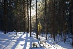 Maderas en el invierno Imagen de archivo libre de regalías