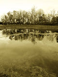Maderas en la orilla del lago, sepia Fotografía de archivo libre de regalías