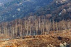 Maderas en valle Imagen de archivo libre de regalías