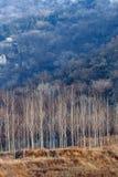 Maderas en valle Foto de archivo