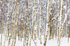 Maderas Nevado Fotografía de archivo libre de regalías