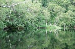 Maderas, reflexiones en el lago Foto de archivo