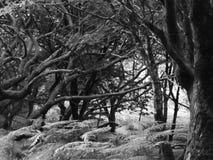 Maderas salvajes fotografía de archivo