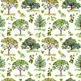 Maderas verdes Parque, modelo del bosque con los árboles Modelo inconsútil watercolor imágenes de archivo libres de regalías