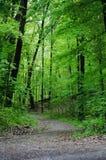 maderas y camino sombrío foto de archivo