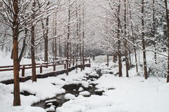 Maderas y río de la nieve Imagen de archivo libre de regalías