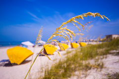 Madiera Beach and sea oats in Florida Stock Image