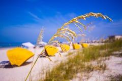 Madiera Plażowi i denni owsy w Floryda Obraz Stock