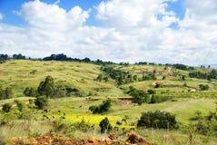 Madikwe natürlicher Vorbehalt, Südafrika stockbild