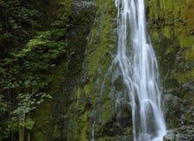 Madison Creek Falls, parc national olympique, Washington image libre de droits