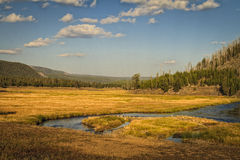 Madison River at evening. In Yellowstone National Park wanders through this amazing meadow near the west entrance to the park Royalty Free Stock Photos