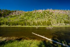 Madison River, het Nationale Park van Yellowstone, Wyoming Royalty-vrije Stock Foto