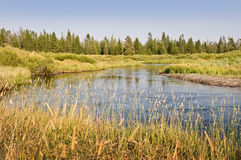 Madison river near West Yellowstone,  USA Royalty Free Stock Photography