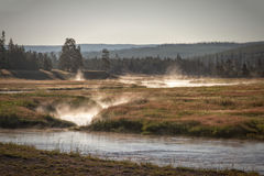 Madison River. In Yellowstone National Park at sunrise royalty free stock images
