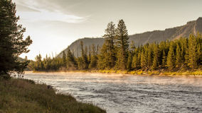 Madison River. In Yellowstone National Park at sunrise royalty free stock image