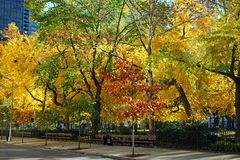 Madison Square Park During Fall Season. Trees with beautiful yellow and orange leaves during the Fall season at Madison Square Park in New York City. The park is Stock Images