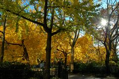 Madison Square Park During Fall Season. Trees with beautiful yellow and orange leaves during the Fall season at Madison Square Park in New York City. The park is Royalty Free Stock Image