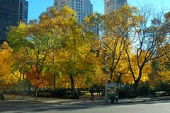 Madison Square Park During Fall Season. Trees with beautiful yellow and orange leaves during the Fall season at Madison Square Park in New York City. The park is Stock Photo