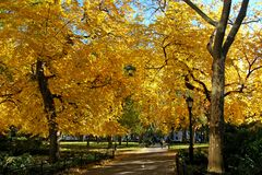 Madison Square Park During Fall Season. Trees with beautiful yellow and orange leaves during the Fall season at Madison Square Park in New York City. The park is Royalty Free Stock Images