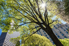 Madison Square Park on Manhattan Royalty Free Stock Photography