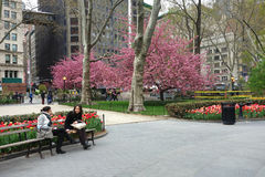 Madison Square Park in Springtime Stock Photos