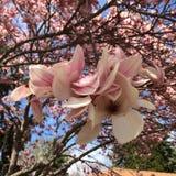 Madison Wisconsin-Baumblüten stockfoto