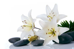 Madonna lilies with spa stone stock photos