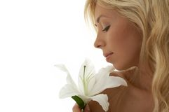 Madonna lily Stock Image