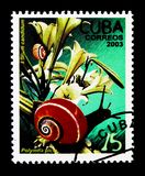 Madonna Lily (Lillium candidum), Fauna and flora serie, circa 20. MOSCOW, RUSSIA - NOVEMBER 25, 2017: A stamp printed in Cuba shows Madonna Lily &#x28 Stock Image