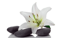 Madonna lily and spa stone. On white Stock Photos
