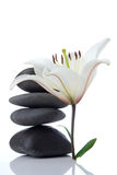 Madonna lily with spa stones Stock Image