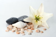 Madonna lily spa stones Stock Photography