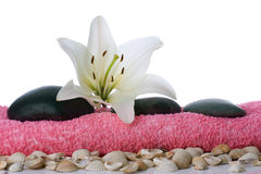 Madonna lily spa stones Royalty Free Stock Photo