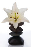 Madonna lily with spa stones Royalty Free Stock Photos