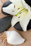 Madonna Lily Spa Stones Royalty Free Stock Photos