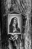 Madonna mit Blume auf Baum - Detail Stockbilder