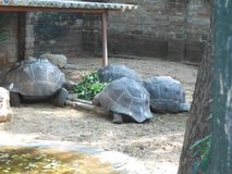 The Madras crocodile bank trust, Chennai, Southern India, Tamil Nadu. The Madras Crocodile Bank Trust and Centre for Herpetology or Croc Bank was the brain child Stock Image