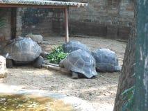 Madras krokodyla banka zaufanie, Chennai, Południowy India, tamil nadu Obraz Stock