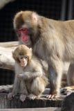 Madre & bambino Fotografia Stock Libera da Diritti