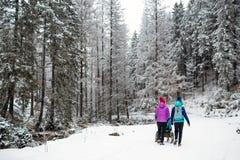 Madre con el cochecito de bebé que disfruta de maternidad en bosque del invierno fotos de archivo libres de regalías