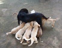 madre con el perrito Fotografía de archivo